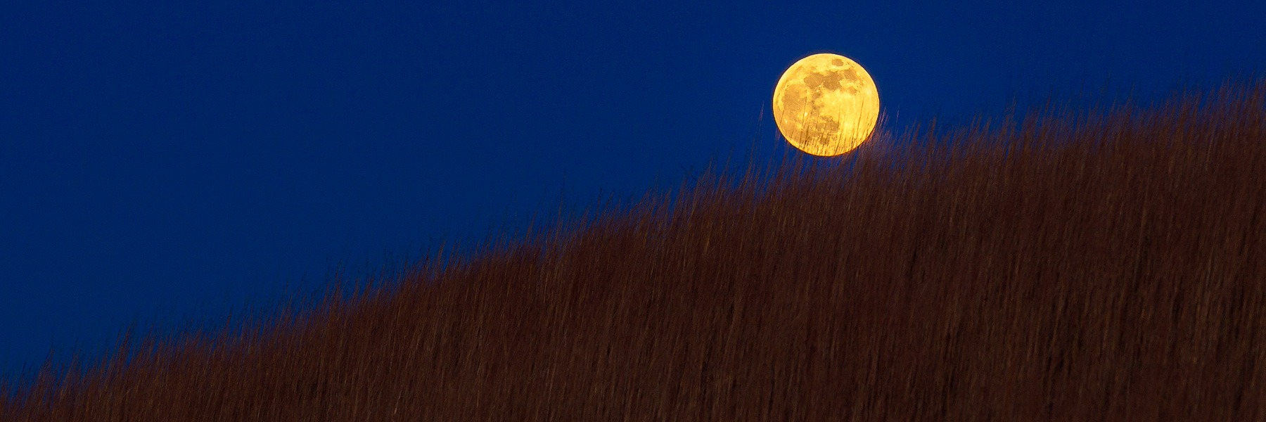 Howling Moon Over Tallgrass Prairie - FHWI_6778