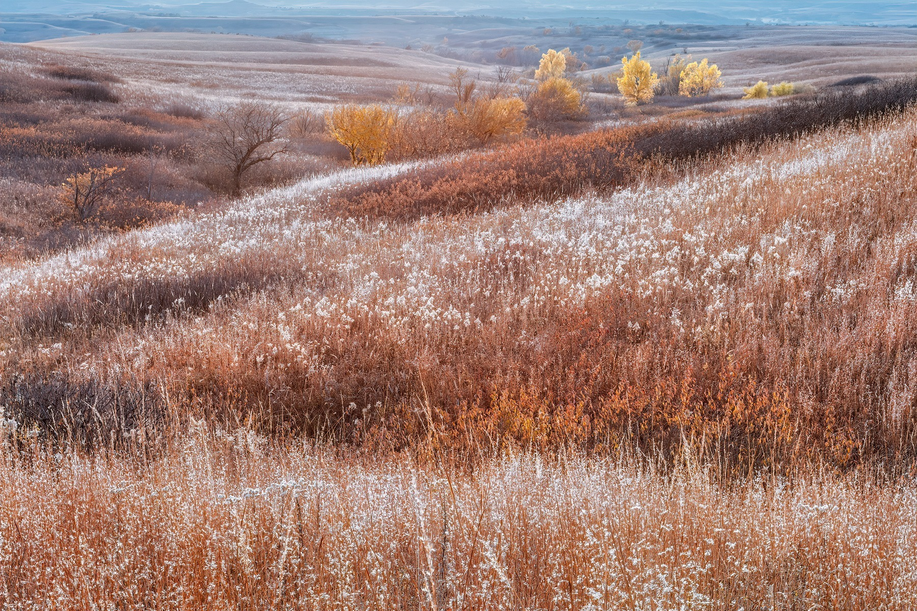 Autumn In The Tallgrass Prairie - FHFA_6126