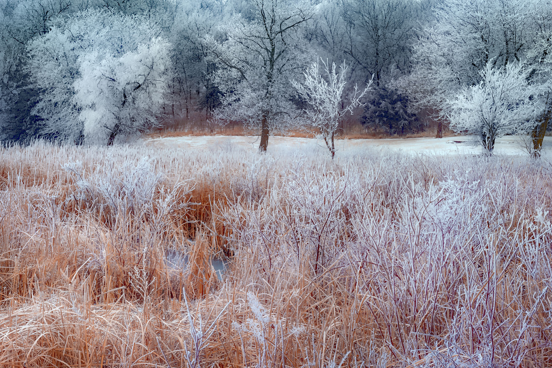 Frosted Disposition - PRWI_2773