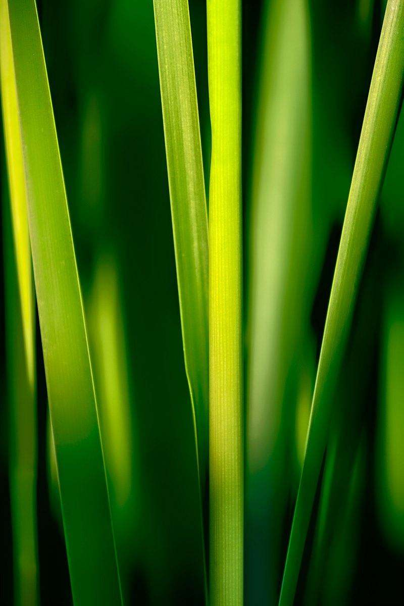 Cattails Up - PA_3009