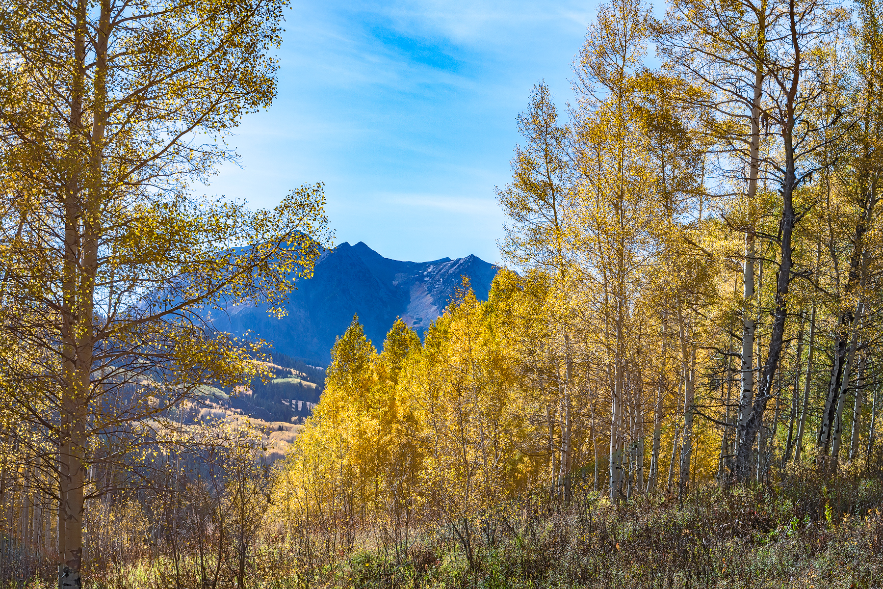 Beyond-The-Aspens---CO_7383