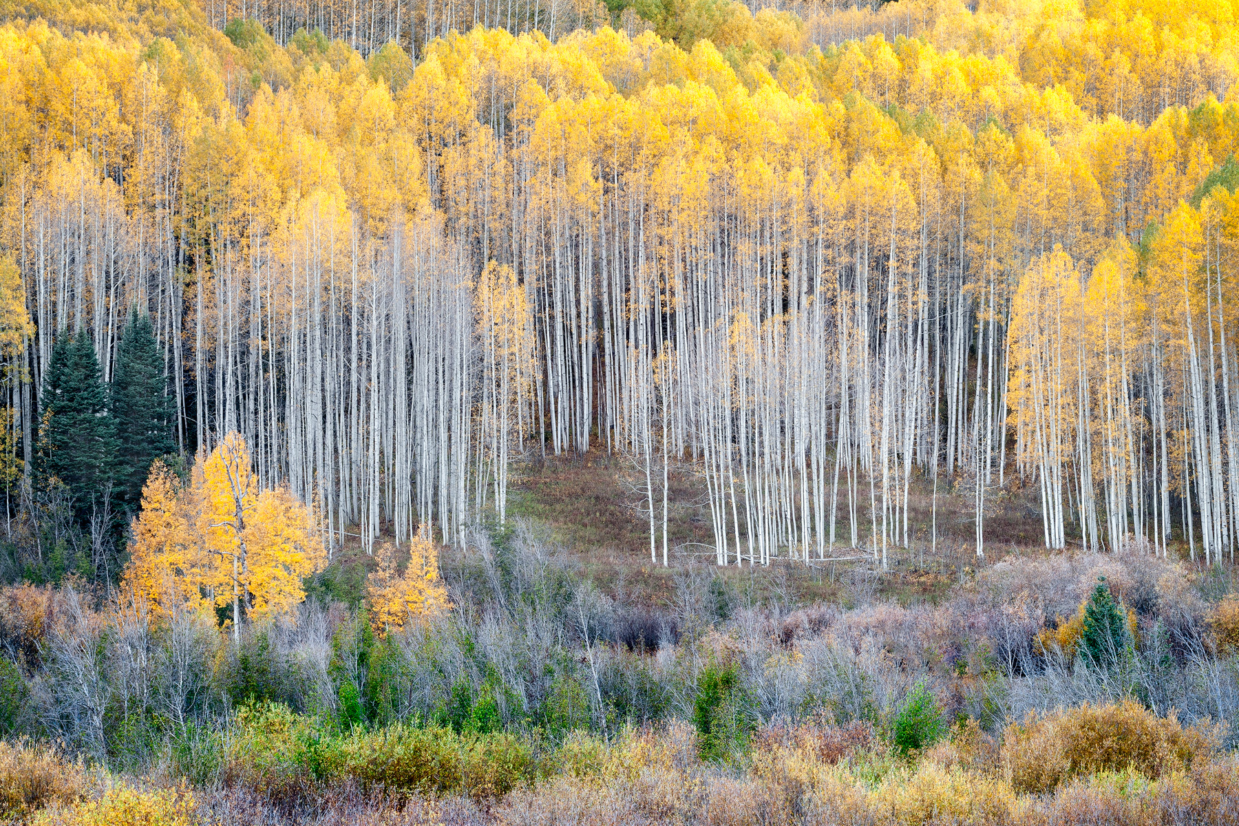 In The Aspens - CO_7587