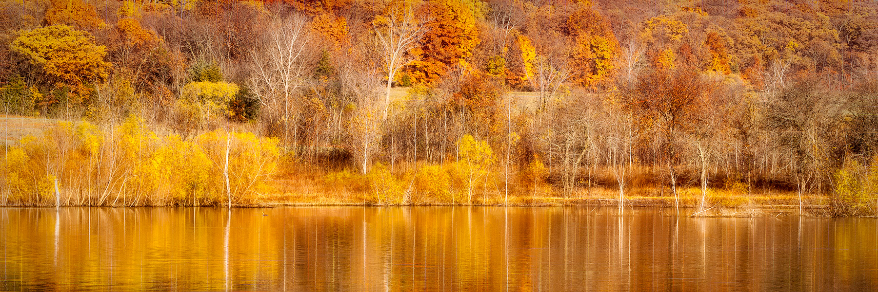 Natures Reflections - TRFA_6094