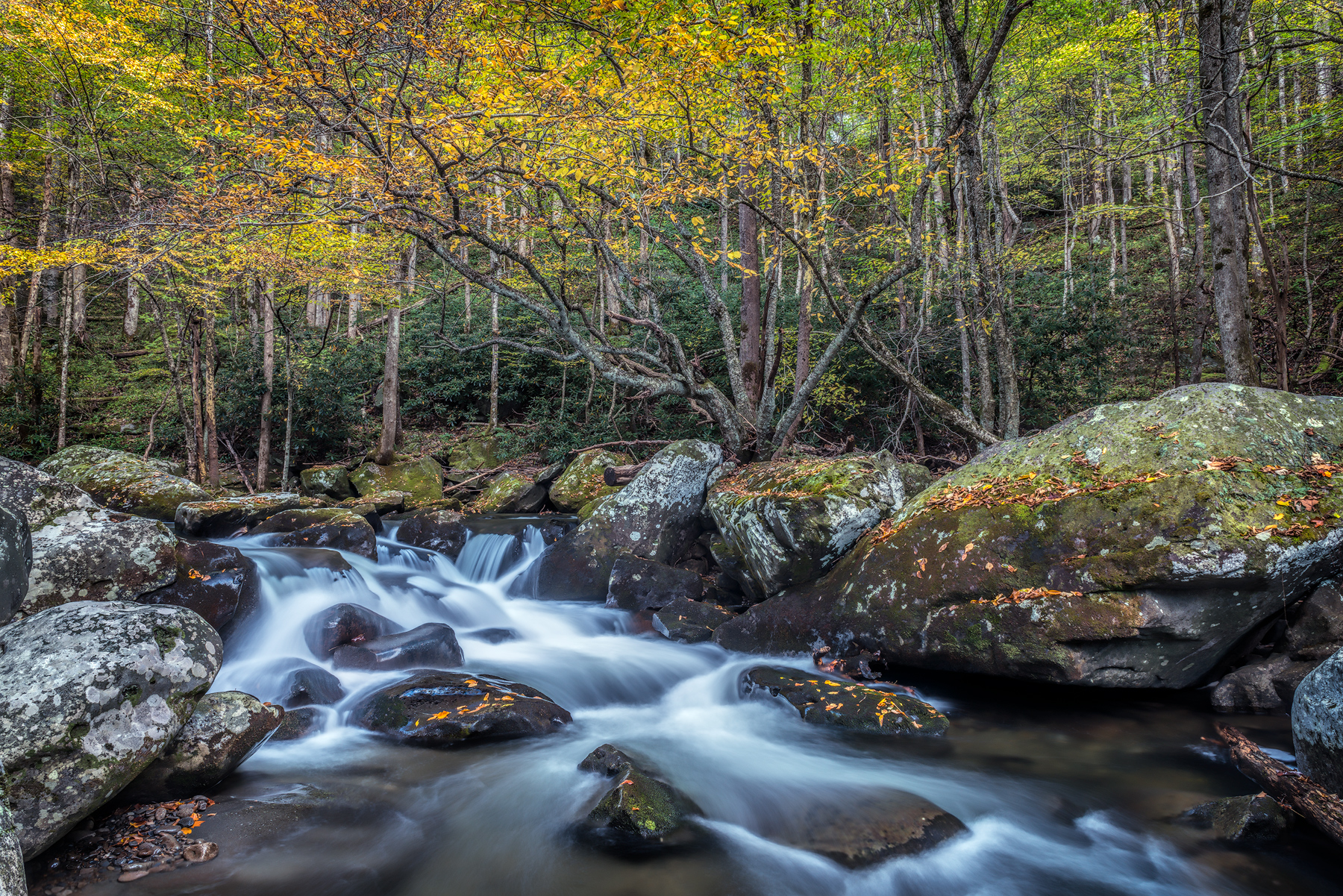 Found Bliss - GSMNP_8491
