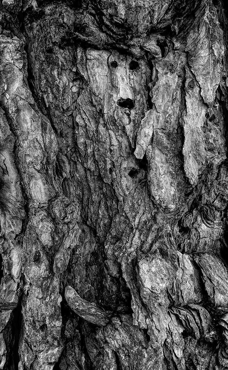 Many Faces of Trees
