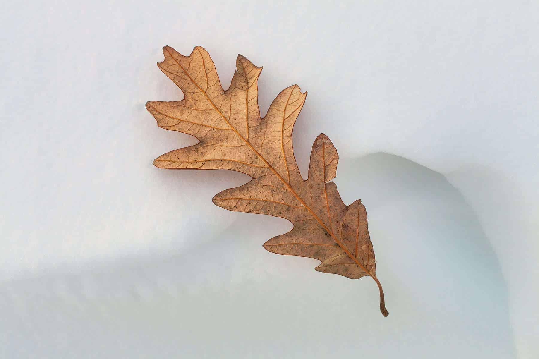 Natures seasonal details