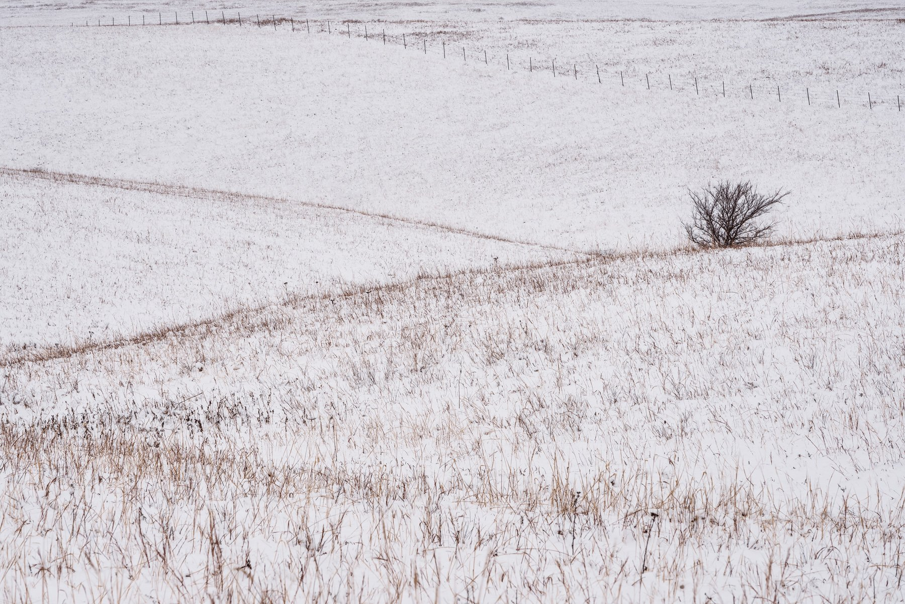 Winter view in the tallgrass prairie, Kansas