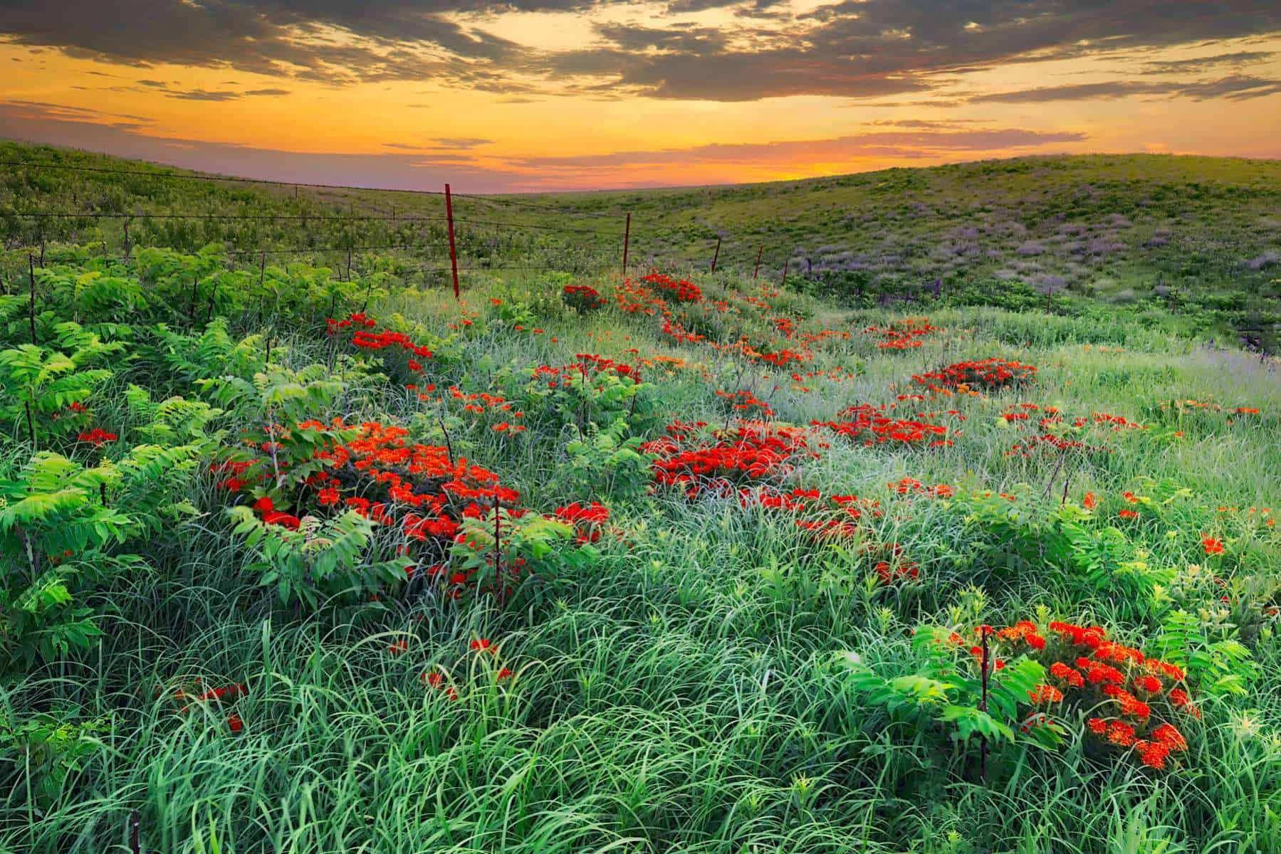Tallgrass Prairies